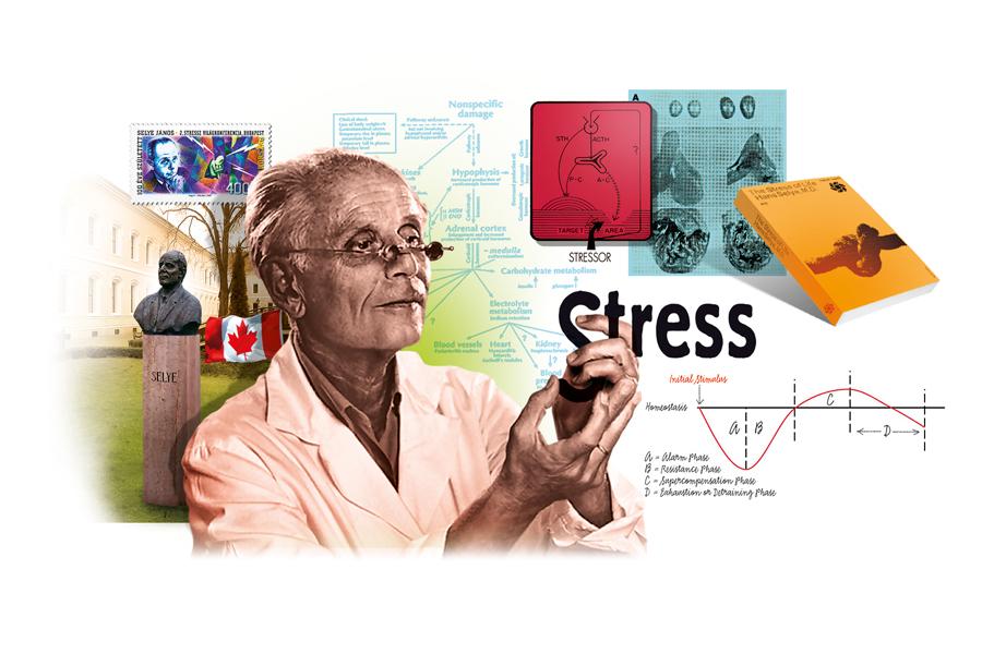 Sdc-Stress-Selye