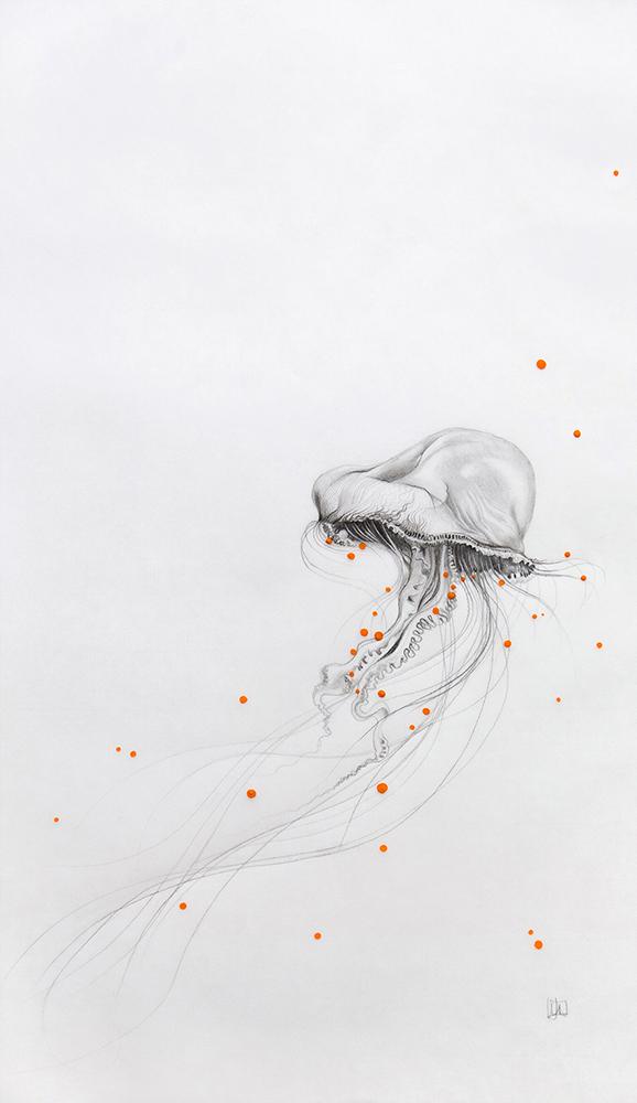 meduse-1