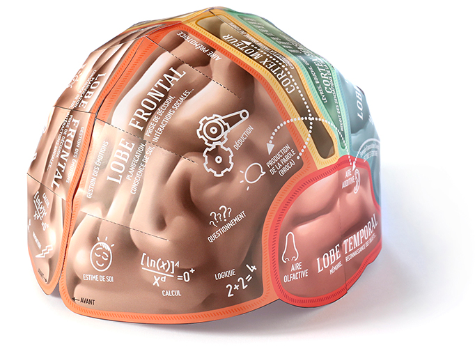 Brain-Hat monté